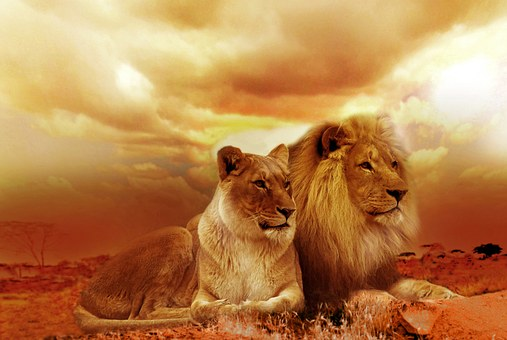 Lions africains Blackisreallybeautiful